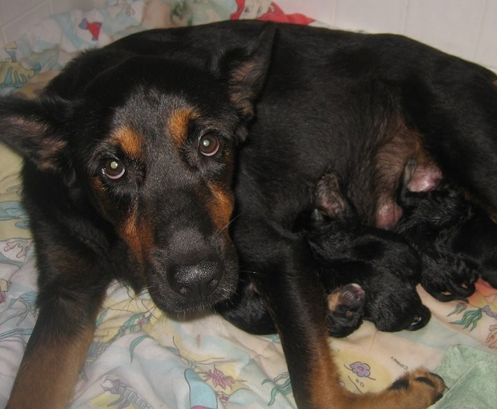 Sheba with Litter